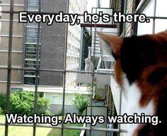 Stalker kitty.