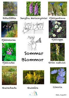 Learn Swedish, Swedish Language, Sign Language, Pre School, Experiment, Cool Kids, Herbs, Education, Learning