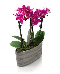 Mini Orchid - Ceramic Planter