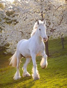 White horse with cherry blossom trees in the back