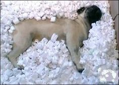 Pug: Some assembly required