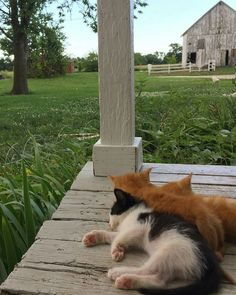 """oldfarmhouse: """" This is Farm Life💛 Bryartonfarms """" aesthetic country Simply Kinship The Farm, Country Life, Country Living, Country Farm, Country Roads, I Love Cats, Cute Cats, Pretty Cats, Adorable Kittens"""