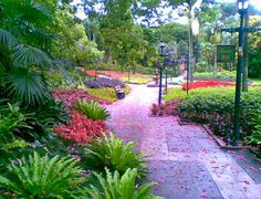 The flower walk with autumn bedding plants in full flower. News South Africa, Durban South Africa, South Afrika, Open Plan Apartment, Autumn Bedding, Kwazulu Natal, Outdoor Swimming Pool, Africa Travel, East Coast