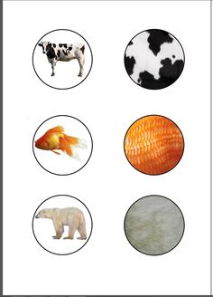 Zoom sur les animaux
