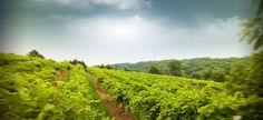 Illinois wineries #vineyard #green #nature