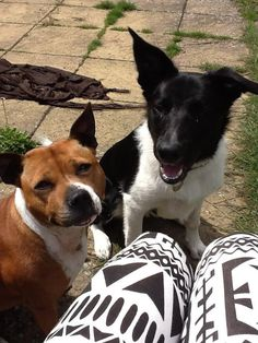 Frankie & Charlie - love them ❤