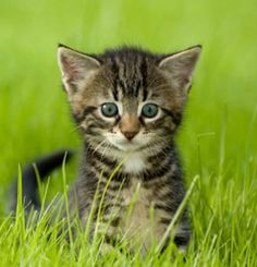 Dogs, cats, rabbits, birds, and other animals suffer in the pet trade and at the hands of abusive humans. Learn about the issues affecting animal companions. Cute Kittens, Kittens Playing, Little Kittens, Cats And Kittens, Farm Animals Pictures, Baby Animals, Cute Animals, Nature Animals, Pets