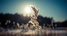 Grass swinging on sunshine.