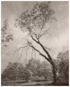 William Mortensen, Tree at Julian, Ca. (photo from the collection of Robert Balcomb)