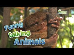Funny Talking Animals - Walk On The Wild Side - Series 2 Episode 1 preview - BBC One - YouTube