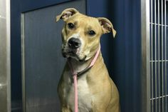 PRINCE - A1098232 - - Manhattan  Please Share:TO BE DESTROYED 12/05/16 **NEW HOPE ONLY!** -  Click for info & Current Status: http://nycdogs.urgentpodr.org/prince-a1098232/