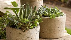 Use cement to make these textured planters.