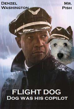 The pilot was drunk: the dog wasn't. FLIGHT DOG Oscars 2013, Pilot, Captain Hat, Dog, Hats, Diy Dog, Hat, Pilots, Doggies