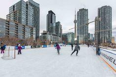 Toronto Views's albums Visit Toronto, Toronto Ontario Canada, Downtown Toronto, Toronto Winter, Outdoor Skating, Ice Rink, Winter Snow, Ice Skating, Cn Tower