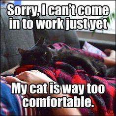 My cat is way too comfortable!
