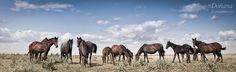 Horses in Doñana National Park, Spain Doñana National Park