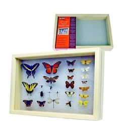 """Insect Display Case 12"""" x 18"""" - Bug and Butterfly Collection Display"""
