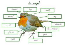 leeswerkje/lichaamsdelen vogel