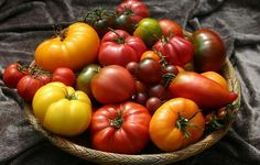 TomatoFest is the ultimate resource for certified organic heirloom tomato seeds with over 650 best tasting, rare, organic heirloom tomato seed varieties along with growing information. Heirloom Tomato Seeds, Heirloom Tomatoes, Types Of Tomatoes, Growing Tomatoes, Growing Vegetables, Dried Tomatoes, Freezing Vegetables, Baby Tomatoes, Healthy Dieting