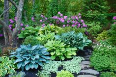 "Hostas and Rhododendron ""Roseum Elegans"". Garden by Steven Breed Garden Designs. Photo by Naomi Leslie"