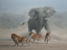 Elephant and Lions by Peter Gray Wildlife Paintings, Wildlife Art, Animal Paintings, Elephants Photos, Elephant Pictures, Nature Animals, Animals And Pets, Cute Animals, Wild Animals Pictures
