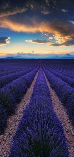Sunset at Valensole plateau in Southeastern France. Pretty Pictures, Cool Photos, Beautiful World, Beautiful Places, Mother Nature, Mother Earth, Lavender Fields, Lavender Blue, Belle Photo