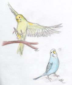 Use flying parakeet, below each rib side, colored ink like piper and mission
