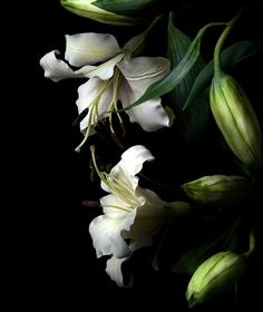 #touchme#claylilies#botanicart