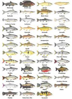 peixes agua doce