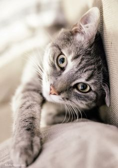 """You may address me as """"Lord Cuteness of Catness."""""""