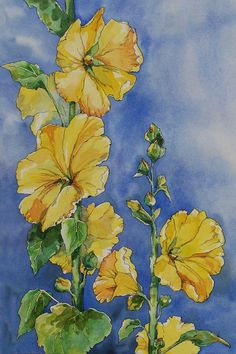 Hollyhock is the classic garden flower. Tall stalks of beautiful blossoms with those wonderful little seed pods. This watercolor study captures the