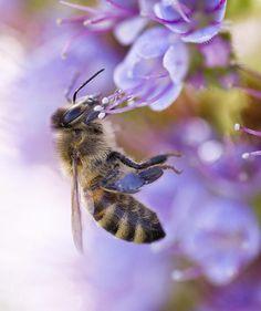 Bee and Echium by Priya Ghose