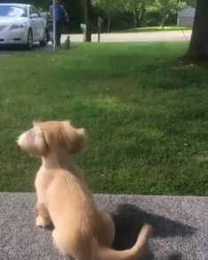Cat And Dog Videos, Cute Puppy Videos, Funny Animal Videos, Animal Memes, Cute Dog Pictures, Cute Puppy Photos, Animal Pictures, Cute Little Animals, Cute Funny Animals