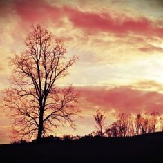 Lovely tree Celestial, Sunset, Photos, Photography, Outdoor, Outdoors, Pictures, Photograph, Fotografie