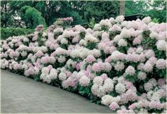 Tolle Pflanzen Rhododendron Cunninghams White How To Choose The Best Dehumidifier The dehumidifier i Landscaping Plants, Outdoor Landscaping, Outdoor Plants, Front Yard Landscaping, Trees And Shrubs, Trees To Plant, Street Trees, Moon Garden, Seasonal Flowers