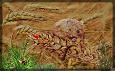 Harvest Mouse, Various Artists, Pyrography, Wood Burning, Some Fun, Mixed Media Art, Beautiful World, Fantasy, Birds