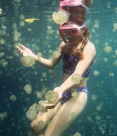 jelly fish lake // palau