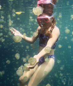 jelly fish lake // palau