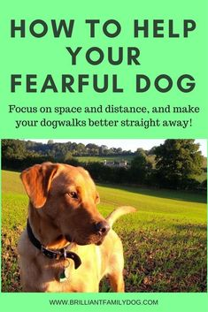 Just this one dog training strategy can transform your walks with your fearful, reactive, or aggressive dog! /KaufmannsPuppy/ #dogtraininghacks