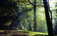 Woodland views at Harewood House near Leeds in autumn