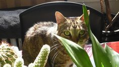 What plants are toxic to cats? http://www.mnn.com/family/pets/questions/what-plants-are-toxic-to-cats (image: by beavela on Flickr http://www.flickr.com/photos/90738513@N00/with/9058608257/ )
