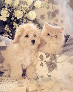 Dog and Cat White