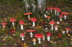 Mushrooms fungi Faerie fairy pixie magic