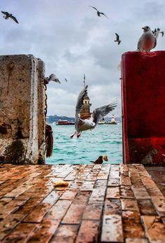 Bird at Golden Horn, Istambul, Turkey Places Around The World, Around The Worlds, Street Photography, Travel Photography, White Photography, Istanbul Turkey, Great Shots, Wonders Of The World, Lighthouse