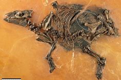 A 48-million-year-old fossil of a pregnant horse and fetus is the oldest of its kind known to science and contains unusually well-preserved evidence of tissue from the womb, researchers said Wednesday.