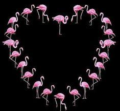 Heart of Flamingos Pretty Birds, Beautiful Birds, Pretty In Pink, My Funny Valentine, Valentines, Flamingo Decor, Pink Flamingos, Heart Canvas, I Love Heart