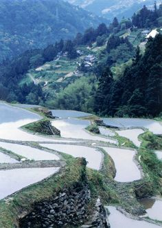 Tokushima, Rice Terraces, Mother Nature, Asia, Environment, Japan, River, Island, City