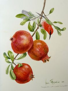 Pomegranate with scarlet honeyeater 1237 Helen Fitzgerald Botanical Wildlife artist Helen Fitzgerald Watercolor Fruit, Fruit Painting, China Painting, Botanical Drawings, Botanical Prints, Painting & Drawing, Watercolor Paintings, Pomegranate Art, Pomegranate Drawing