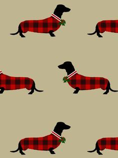 Dapper Dachshund Holiday Cards @ TheFullerCollection.com