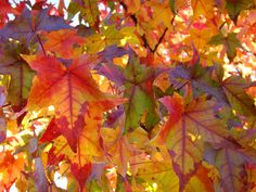 Autumn Photograph - Colorful Autumn Leaves Art Prints Trees by Baslee Troutman Autumn Art, Autumn Leaves, Fall Arts And Crafts, Leaf Projects, Landscape Artwork, Photography Gifts, Fall Wallpaper, Leaf Art, Flower Petals